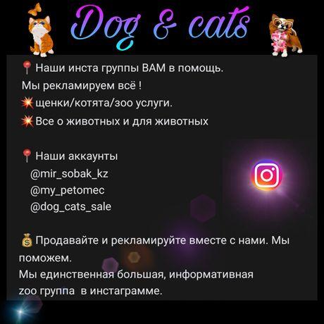 Мир любителей собак в инстаграмме
