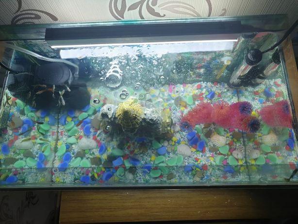 Продам два  аквариума с рыбками фильтр  обогрев все имеется 35 тыс
