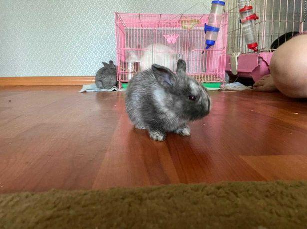 Кролики декаративные