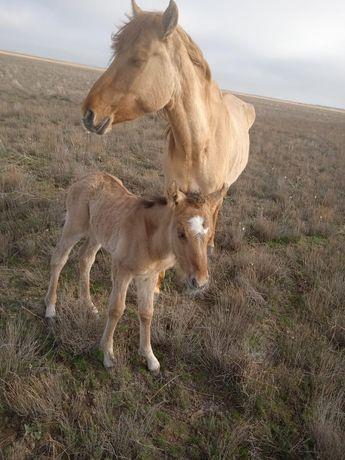 Продам табун лошадей