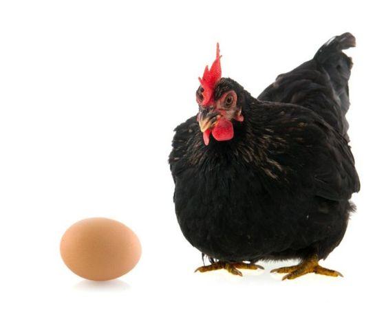 Яйца от черных кур