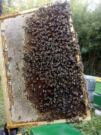 Stupi cu familii de albine