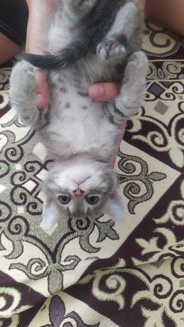 Потерялся котенок