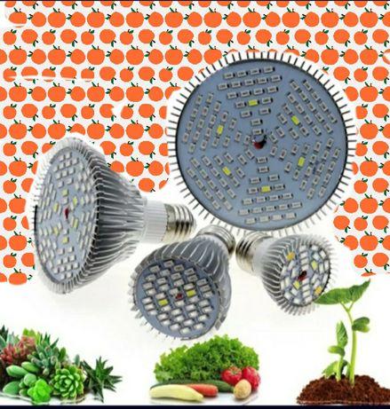 Фито лампи за бърз растеж на растения