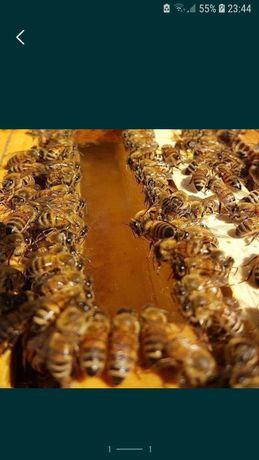 Sirop F 40 pentru albine
