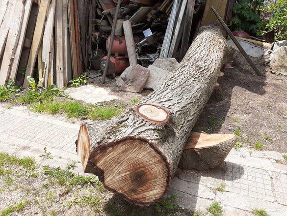 Ствол от орехово дърво за дървен материал