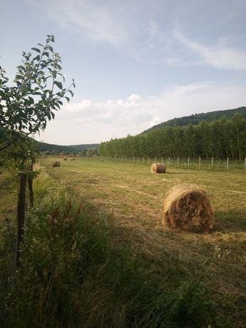 Baloți de trifoi cu iarbă deSudan, și Lucernă cu iarbă ,pra coasă.