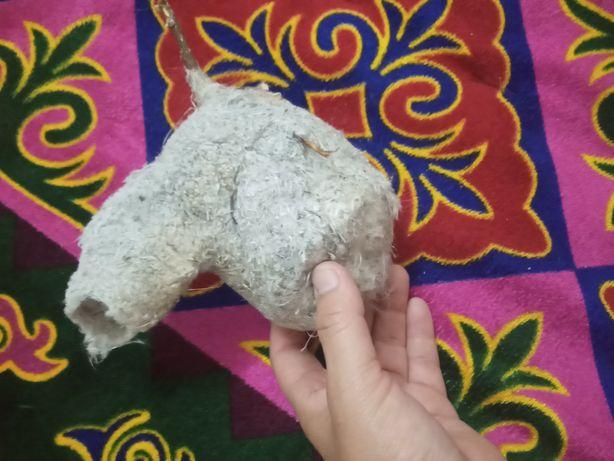 Таза куркултай уясы котере алмай журген келиншектерге белд ем ретинде