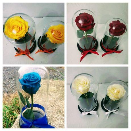 Cupola cu trandafir alb galbui