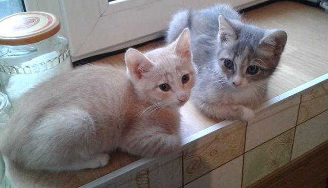 Кошечки,3,5 мес.в добрые руки