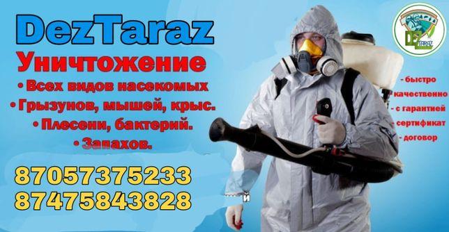 Дезинсекция Дезинфекция Дератизация клопы тараканы мыши блохи