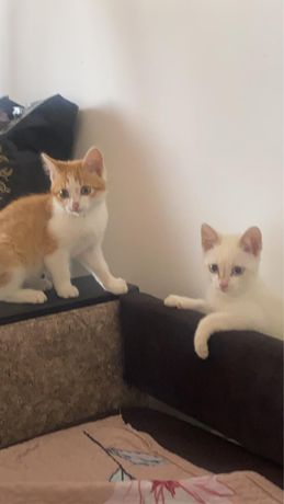 Котята (милые, добрые)