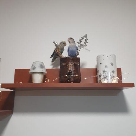 Papagali love-birds agapornis