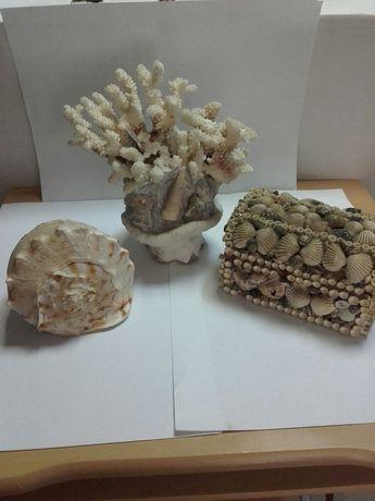 Vând-coral-casetă-cochilie