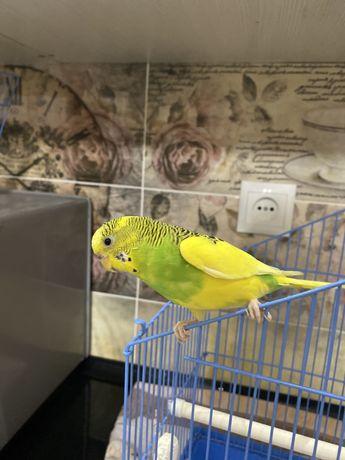 Папугай птицы