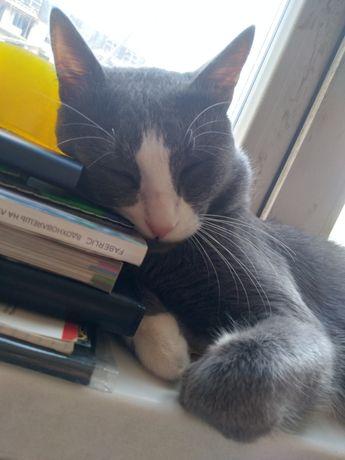 В хорошие руки кот 1,3 года приучен к лотку