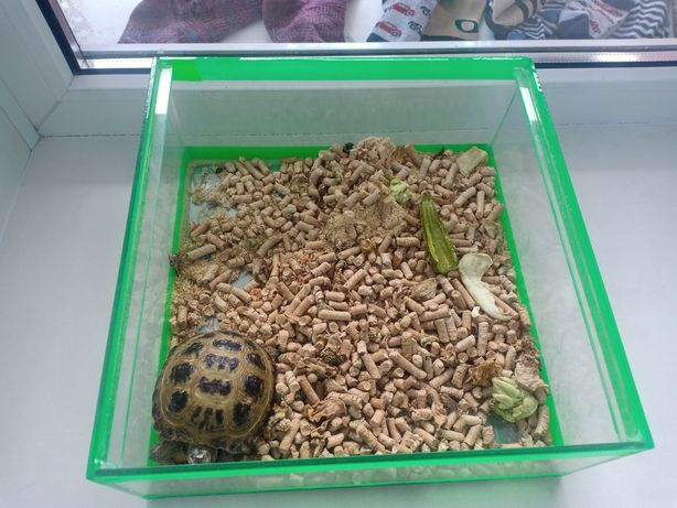 Продам черепаху, ещё малыш 2 годика