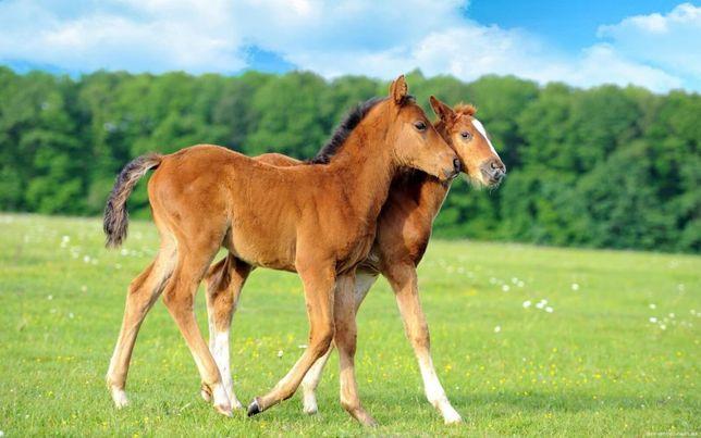 Продам лошадей жеребят кобылки