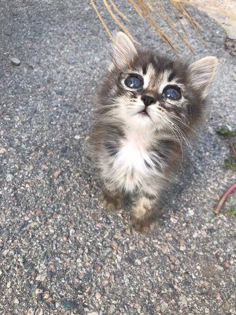 Котёнок! Срочно!