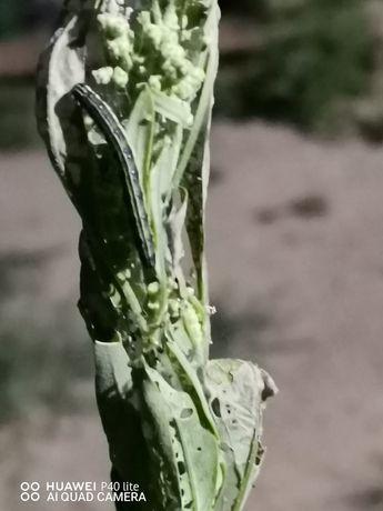 Отрава от гусениц и прочих насекомых