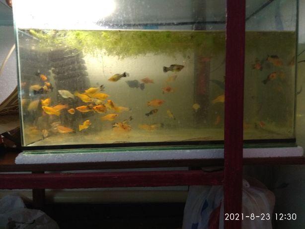 Аквариум,с, рыбками