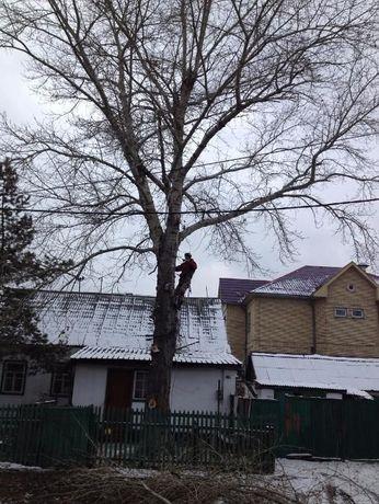 Удаление деревьев. Спил деревьев.