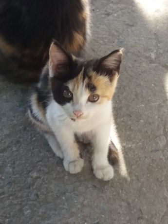 Котята и кошки отдам