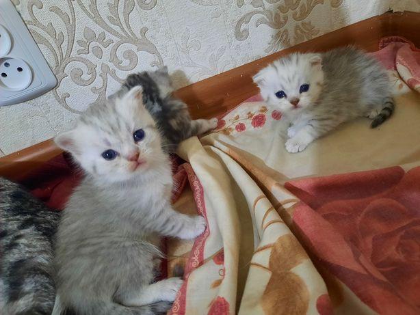 Продам котят хорошие руки