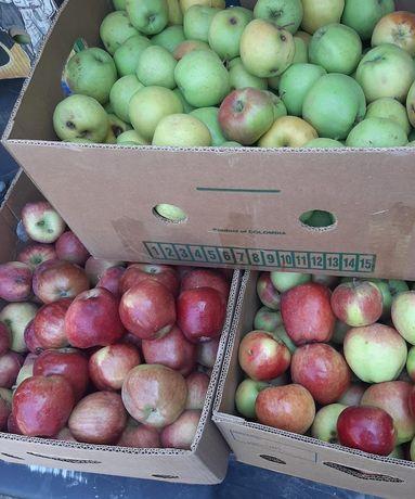 продам дачные яблоки