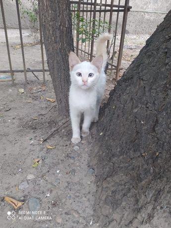 Классные котятки