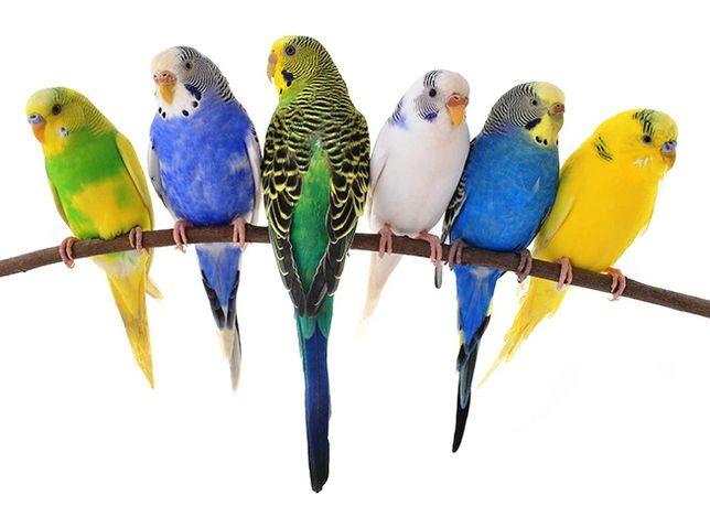 Попугаи всех видов