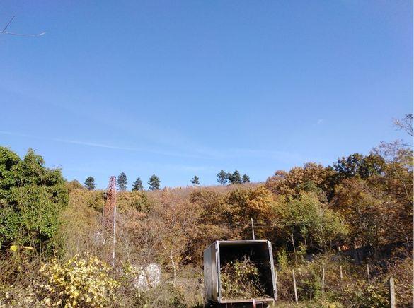 Кастрене и рязане на високи и опасни дървета Варна