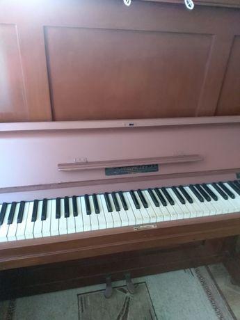 """Пиано """" Цимерман"""""""