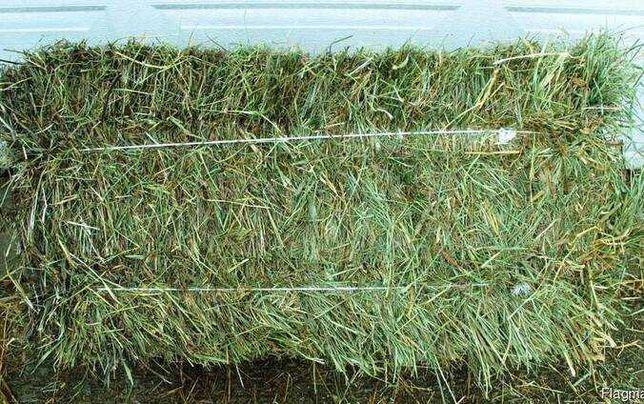 Продам сено в тюках многотравье