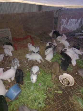 Продам кроликов возраст полтора месяца