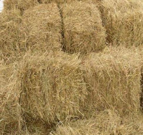 Свежее сено в тюках