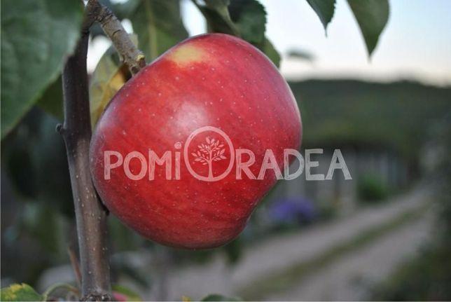 Pomi Fructiferi în Oradea - Pepiniera PomiOradea