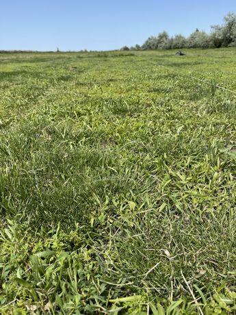 Луговой рулонный газон