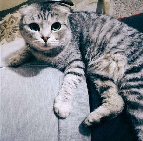 Потерялась кошка в районе 66 квартала.