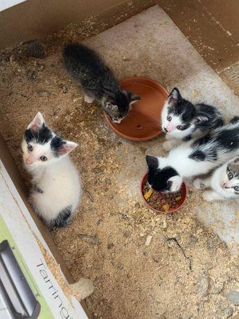 Ofer pisici frumoase