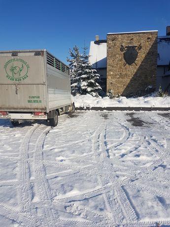 Transport animale vii !