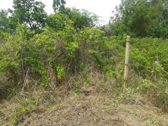 Чистене на терени/рязане на дървета/градински услуги/абон. поддръжка