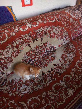 Отдам котенка рыженький