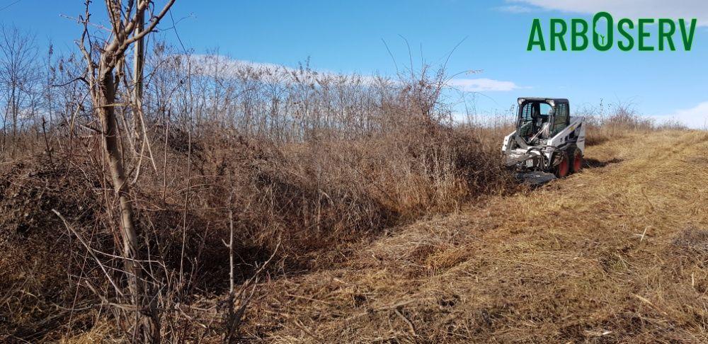 Cosire defrisare curatare tocare iarba arbusti rugi ambrozie maracini