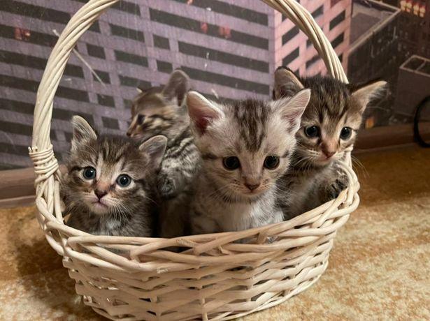 Ищем добрые и заботливые ручки для маленьких котят