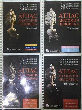 Анатомия атлас Автор Синельников