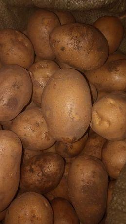 Продам картошку Гала