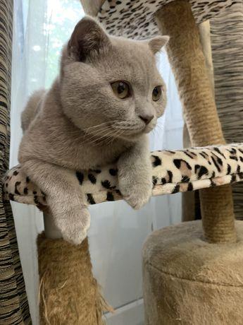Отдам котенка 5 месяцев
