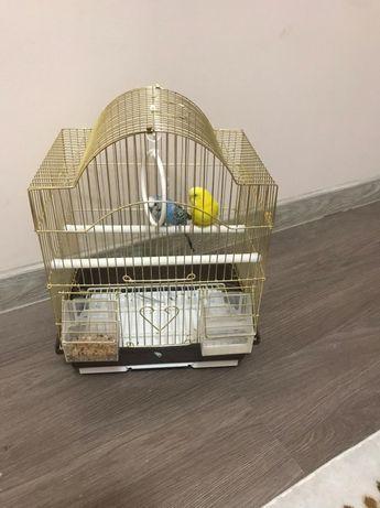 Попугай за 15 тысяч тенге