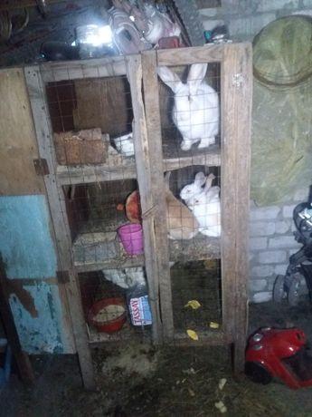 Почти даром куры несушки,кролики